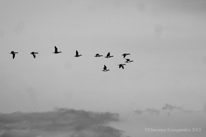 bird_school