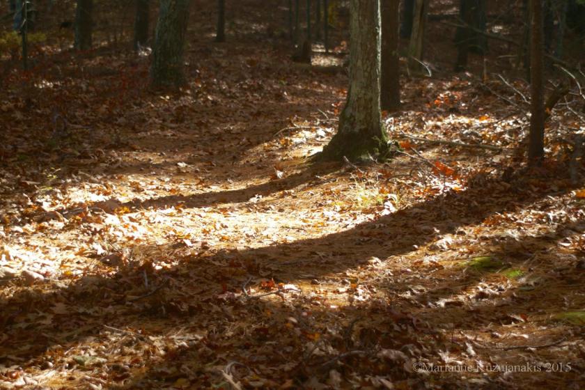 leafy_path_2