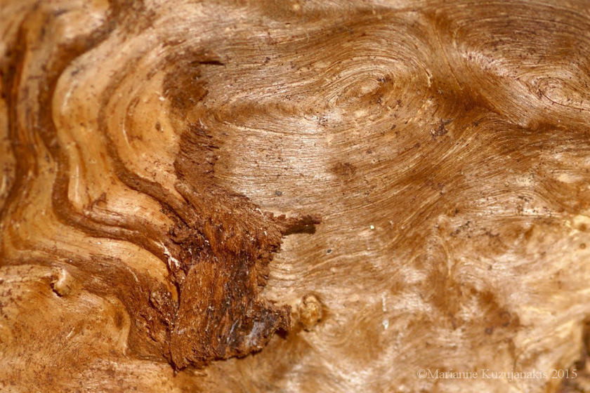tree_bark_2